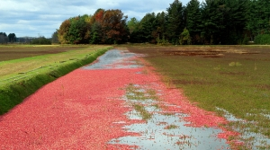 Read full article: USDA Will Buy 68M Cranberries To Help Market Stabilize