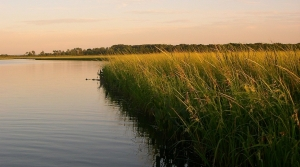 Read full article: Rice Beds Rebound In Northern Wisconsin Lake Following Efforts To Rein In Carp