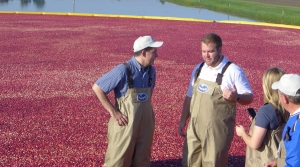 Read full article: Cranberry Growers Might Contribute More Funding For UW Research