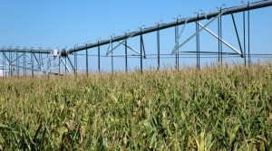 Read full article: UW Study: Irrigated Farms In Central Sands Region Linked To Cooler Temperatures