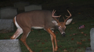 Read full article: Chippewa Tribe Officials Say No Protests Expected Over First Night Deer Hunt