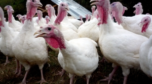Read full article: Barron County Officials Take On Economic Impact Of Bird Flu