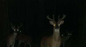Read full article: Tribes Could Soon Begin Nighttime Deer Hunts In Northern Wisconsin