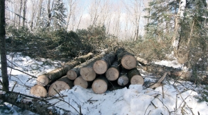 Read full article: Committee OKs Changes To State's Logging Tax Credit Program