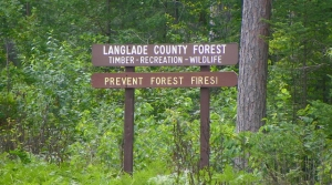 Read full article: Local Officials Look For More State Forestland Money