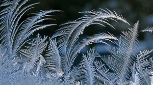 Read full article: 'News From The North': Poems Explain Winter As A Spiritual Exercise
