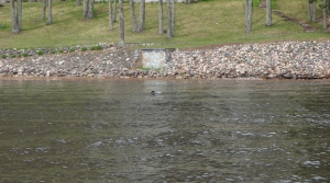 Read full article: State Making Money Available For Lake Property Habitat Projects