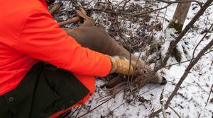 Deer Hunter With Deer