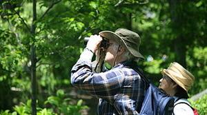 Birdwatching, image by Wikimedia Commons user Daniel Schwen
