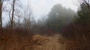 Read full article: Wisconsin Getting $33M In Federal Grants For Conservation