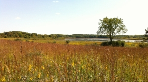 Richard Bong State Recreation Area, photo by Judith Siers-Poisson
