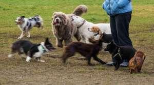 dog park, Doug Brown (CC-BY-NC-SA).