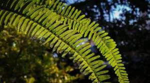 fern, Theen Moy (CC-BY-NC-SA)
