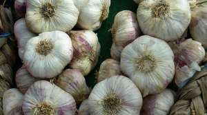 garlic, photo by Judith Siers-Poisson