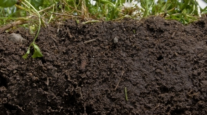 Read full article: Scientist: Changing Soil Management Could Improve Crops, Capture More Carbon