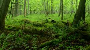 Read full article: Paper Partnership to Create Sustainable Woodlands
