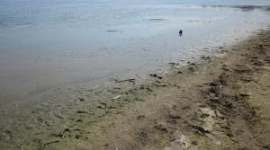 Read full article: EPA Releases More Great Lakes Beach Grants