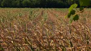"""Read full article: Ag Secretary Tells Farmers to """"Start Talking"""" About Drought"""