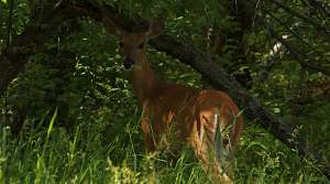 Read full article: DNR: Disease May Be Killing Dozens of Deer