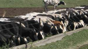 Read full article: Wisconsin Dairy Cautiously Optimistic About 2013