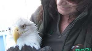 Read full article: Raptor Expert Says Eagle Shootings Up after Web Video