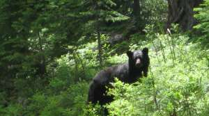 Read full article: Bear Quota Down For 2013