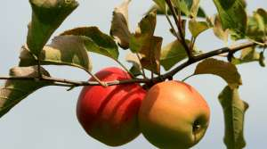 Read full article: Early Warm Temps Worrying For Fruit Trees
