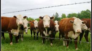 Read full article: Increased Japanese Demand For Beef Helps Wisc. Farmers