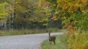 Read full article: Gov Would Let Land Owners Run Deer Hunts On Their Property
