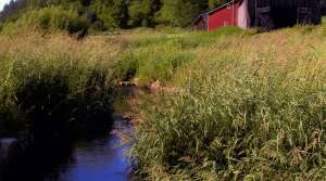 Read full article: DNR Says Phosphorus Seriously Affecting Wisconsin Waters