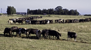 Read full article: New Zealand Drought Could Be Boon For Wisconsin Dairy Farmers