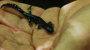 Read full article: Earth Day Activities From Salamanders To 'Seed Dating'