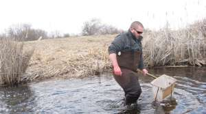 Read full article: Dam Removal Might Help Northern Pike Migration