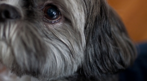 Read full article: Veterinarians Would Be Required To Report Abuse Under New Law