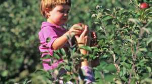 Read full article: Researchers Begin Study On Farm Children's Health