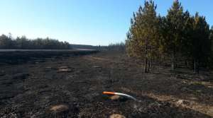 Read full article: Douglas County Residents Begin Assessing Wildfire Damage