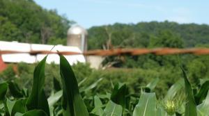 Read full article: Wisconsin Congressmen Want To Cap Public Crop Insurance