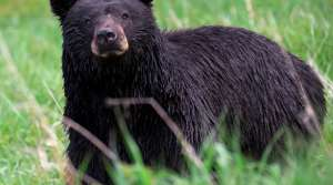 Read full article: Part Of Apostle Islands Closed On Account of Bears