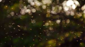 Read full article: It's Not Just You  — Those Tiny Bugs You Know As 'Gnats' Are Out In Full Force