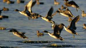 Read full article: More Lakes Approved For Open-Water Duck Hunting