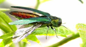 Read full article: How A Green Beetle May Cost Superior $2.2M