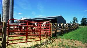 Read full article: State Dairy Industry Has Record-Breaking 2013