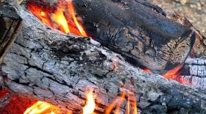 Read full article: DNR Board Tightens Restrictions On Firewood