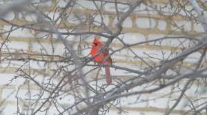 Read full article: Great Backyard Bird Count Begins Friday