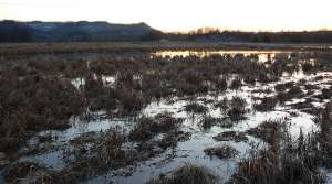 Read full article: New Group Seeks To Preserve, Protect La Crosse Marsh