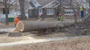 Read full article: City Foresters Resume Fight Against Emerald Ash Borer