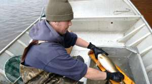 Read full article: Increased Water Drawdown In Sawyer Co. Appears To Be Helping Walleyes