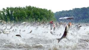 Read full article: Researchers Propose New Tool For Keeping Asian Carp At Bay: Sound