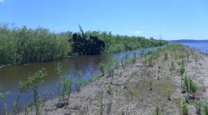 Read full article: Mississippi River Islands Get Restored Following Heavy Erosion Damage