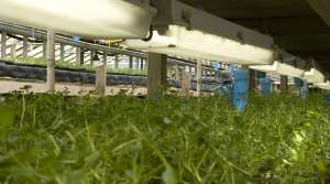 Read full article: Aquaponics Innovation Center Will Train Workers, Develop New Techniques In Emerging Industry